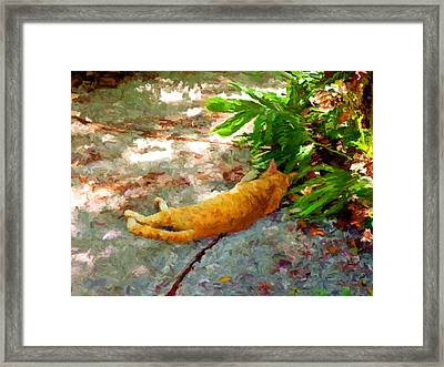 Hot Cat Framed Print by David  Van Hulst