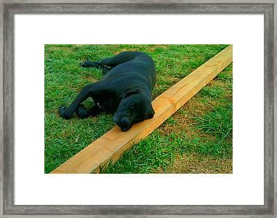 Hot Dog On A Stick Framed Print by Douglas Kriezel