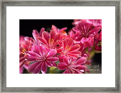 Hot Glowing Pink Delight Of Flowers Framed Print