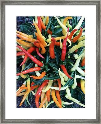 Hot Hot Hot Framed Print by Vijay Sharon Govender