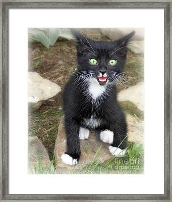 Framed Print featuring the photograph Hot Kitty  by Lila Fisher-Wenzel