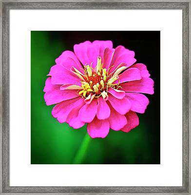 Hot Pink Framed Print by Michael Putnam