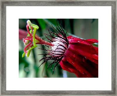 Hot Red Passion Framed Print
