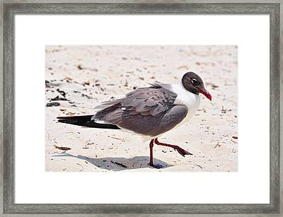 Framed Print featuring the photograph Hot Sand by Jan Amiss Photography
