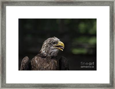 Hot Stuff Framed Print by Andrea Silies