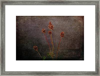 Framed Print featuring the photograph Hot Summer Victims by Randi Grace Nilsberg