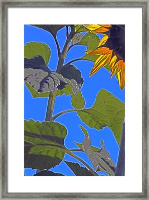 Hot Sunflower Framed Print by Leslie-Jean Thornton