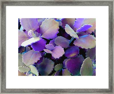 Hothouse Succulents Framed Print