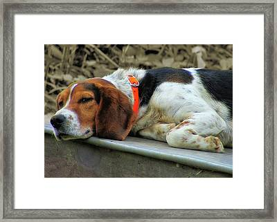 Hound Dog Framed Print by JAMART Photography