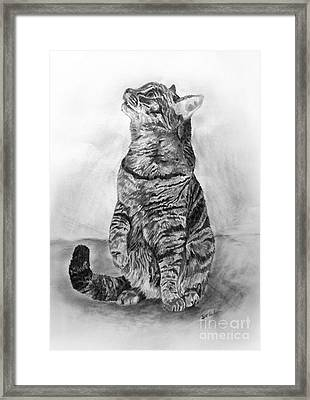 House Cat Framed Print