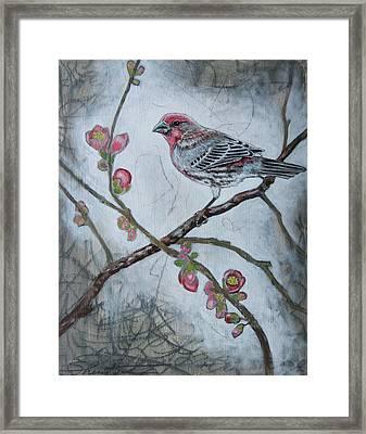 House Finch Framed Print by Sheri Howe