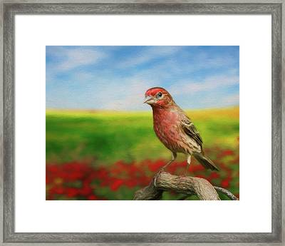 Framed Print featuring the photograph House Finch by Steven Richardson
