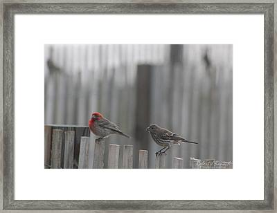 House Finches On The Fence Framed Print