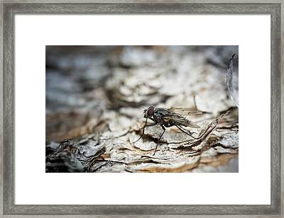 Framed Print featuring the photograph House Fly by Chevy Fleet