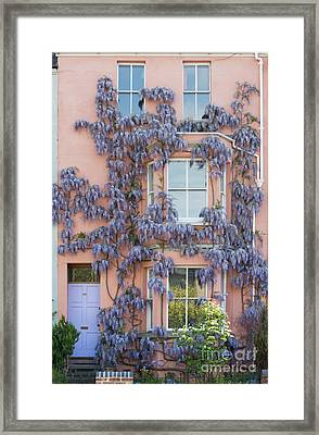 House Of Wisteria Framed Print by Tim Gainey