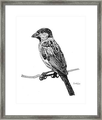 House Sparrow Framed Print by Cynthia  Lanka