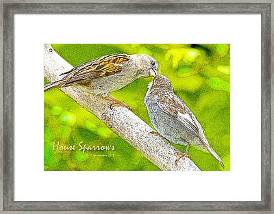 House Sparrows Mother Feeds Juvenile Digital Art Framed Print by A Gurmankin