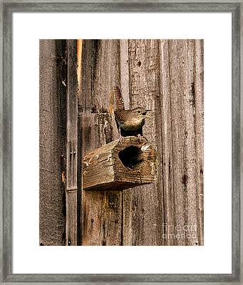 House Wren And House Framed Print by Timothy Flanigan