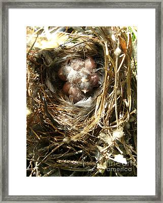 Framed Print featuring the photograph House Wren Family by Angie Rea