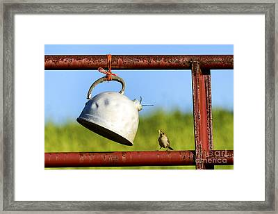 House Wren Feeding Offspring Framed Print