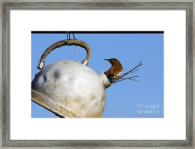 House Wren In New Home Framed Print