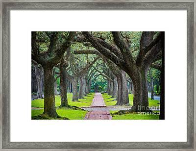 Houston Trees Framed Print by Inge Johnsson