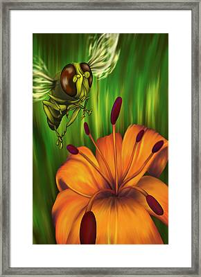 Hover Fly Framed Print by Tom Wrenn