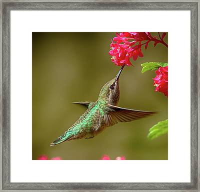 Hover Lunch Framed Print by Sheldon Bilsker