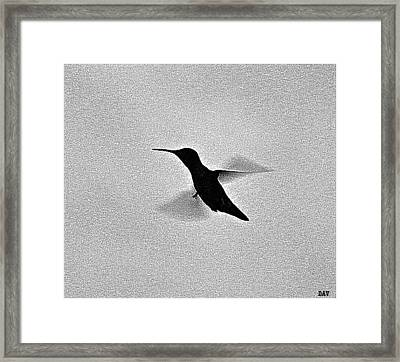 Hover Of The Hummingbird Framed Print