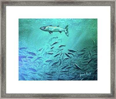 Hovering Baracuda Framed Print by Joseph   Ruff