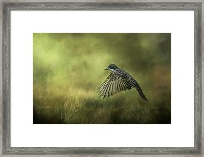 Hovering Eastern Kingbird In Flight Art Framed Print by Jai Johnson