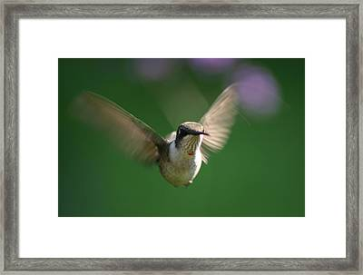 Hovering Hummingbird Framed Print by Robert E Alter Reflections of Infinity