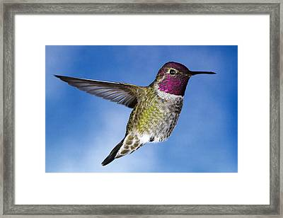 Hovering In Sky Framed Print