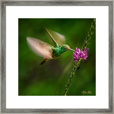 Framed Print featuring the photograph Hovering In The Vervain  by Rikk Flohr