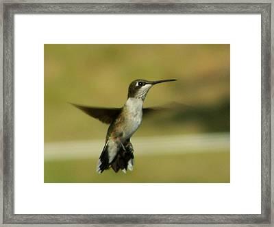 Hovering Framed Print
