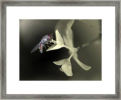 Hoveryfly Framed Print by Terry Bridges