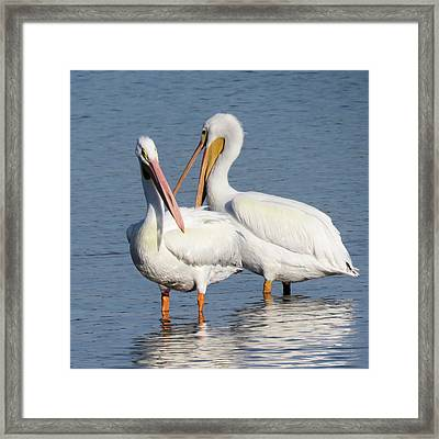 How About A Date Gorgeous? Framed Print by Rosalie Scanlon
