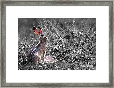 How About Two Out Of Three . Desaturated Framed Print by Wingsdomain Art and Photography