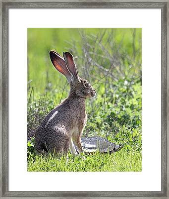 How About Two Out Of Three In Portrait Framed Print by Wingsdomain Art and Photography