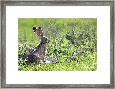 How About Two Out Of Three Framed Print by Wingsdomain Art and Photography
