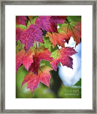 Framed Print featuring the photograph How Beautifully The Leaves Grow Old  by Kerri Farley