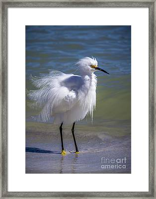 How Do I Look Framed Print by Marvin Spates