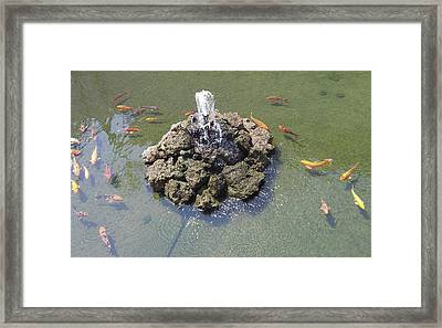 How Koi Framed Print