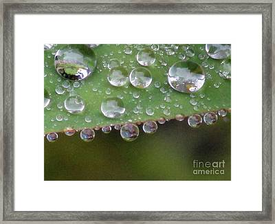 How Many Raindrops Can A Leaf Holds. Framed Print