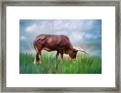 How Now Brown Cow Framed Print