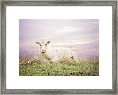 How Now White Cow Framed Print by Heather Applegate