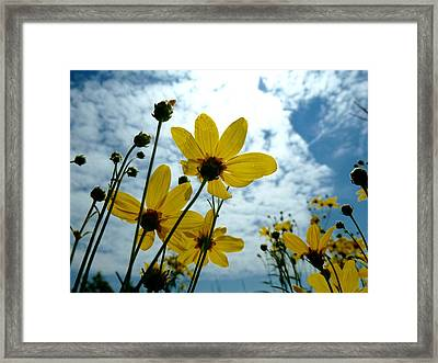 How Summer Feels Framed Print by Tim Good