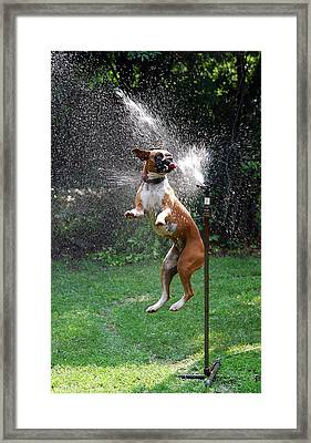 How To Handle A Heat Wave Framed Print by Skip Willits