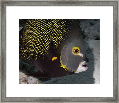 How To Use Makeup To Advantage Underwater Framed Print by Jean Noren
