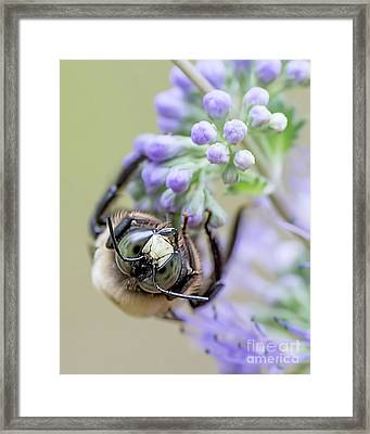How You Doing? Framed Print